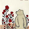 Rose_bear_3